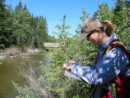 alberta wetland assessment authenticating professional