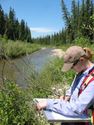 alberta wetland assessment authenticating professional